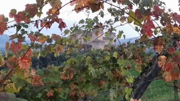 Vigna con castello