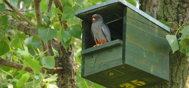 Alla ricerca dei nidi