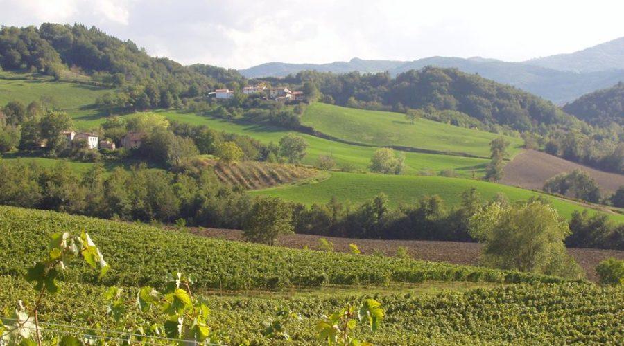 Ariola vigna panorama