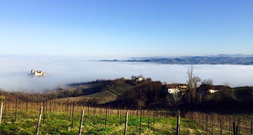 Itinera Emilia torrechiara vigne