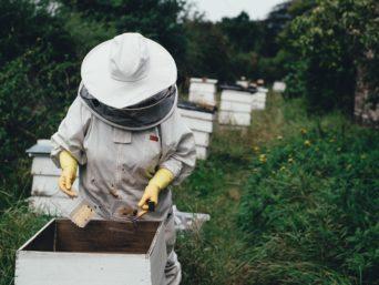 apicoltore_terra_viaggi