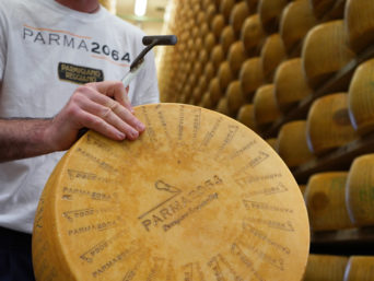 caseificio parma2064 forma di parmigiano reggiano