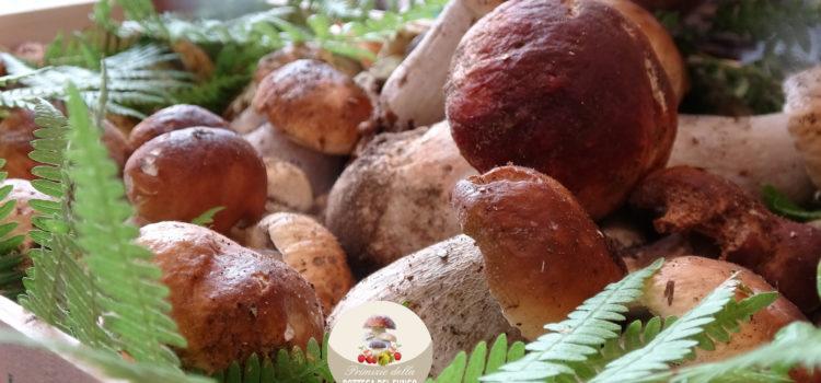 bottega del fungo porcini