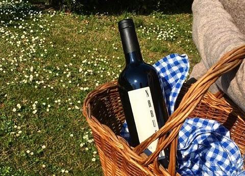 Tour montagna, collina e città di Parma - Azienda vitivinicola Monte delle Vigne
